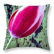 Tulip Against Green Wall Throw Pillow