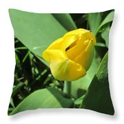 Tulip Day Old Bud Throw Pillow