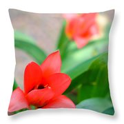 Tulip Of Dream Throw Pillow