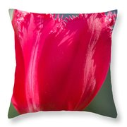 Tulip On The Gray Background Throw Pillow