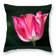 Tulip Painted In Shades Of Pink Throw Pillow by Rona Black