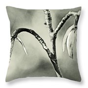 Tulip Poplar Empty Seed Heads - Black And White Throw Pillow