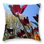 Tulip Tango Throw Pillow