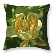 Tulip Tree Throw Pillow