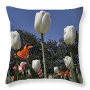 Tulips At Dallas Arboretum V36 Throw Pillow