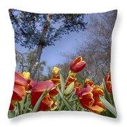 Tulips At Dallas Arboretum V37 Throw Pillow