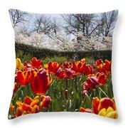 Tulips At Dallas Arboretum V39 Throw Pillow