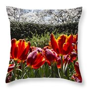 Tulips At Dallas Arboretum V41 Throw Pillow