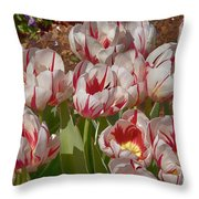 Tulips At Dallas Arboretum V53 Throw Pillow