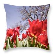Tulips At Dallas Arboretum V62 Throw Pillow