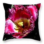 Tulips At Dallas Arboretum V77 Throw Pillow