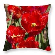 Tulips At Dallas Arboretum V83 Throw Pillow