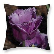 Tulips At Dallas Arboretum V88 Throw Pillow