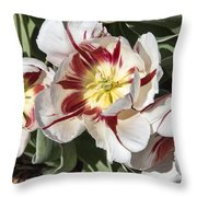 Tulips At Dallas Arboretum V91 Throw Pillow