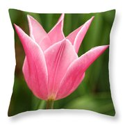 Tulips At Thanksgiving Point - 17 Throw Pillow