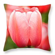 Tulips At Thanksgiving Point - 19 Throw Pillow