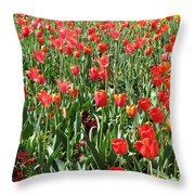 Tulips - Field With Love 61 Throw Pillow