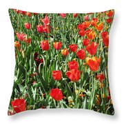 Tulips - Field With Love 62 Throw Pillow