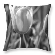 Tulips - Infrared 27 Throw Pillow