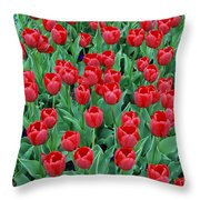 Tulips Tulips And Tulips Throw Pillow