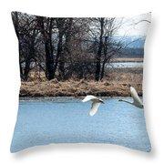 Tundra Swan Flight Throw Pillow