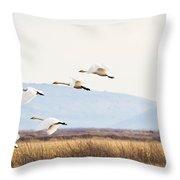 Tundra Swans In Flight Throw Pillow