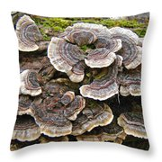 Turkey Tail Bracket Fungi -  Trametes Versicolor Throw Pillow