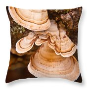 Turkey Tail Fungus 5 Throw Pillow