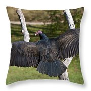 Turkey Vulture Cathartes Aura Throw Pillow