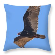 Turkey Vulture Soaring Overhead Drb153 Throw Pillow