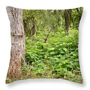 Turk's Cap And Tree Throw Pillow
