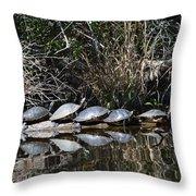 Turtle Lineup Throw Pillow