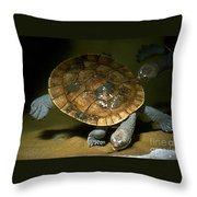 Turtles Float Throw Pillow