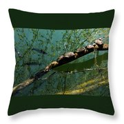 Seven Turtles In The Sun Throw Pillow