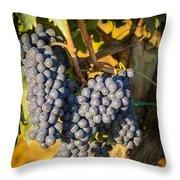 Tuscan Vineyard Throw Pillow by Brian Jannsen