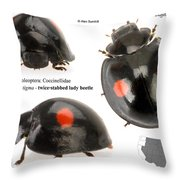 Twice-stabbed Lady Beetle Throw Pillow