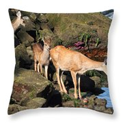 Twin Fawns And Mother Deer On The Shore Throw Pillow