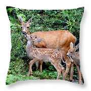 Twin Fawns And Mother Deer Throw Pillow