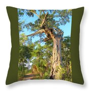 Twirling Tree Path Throw Pillow