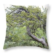 Twisted Cedar Throw Pillow