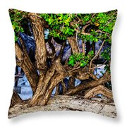 Twisted Trunks Throw Pillow