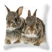 Two Baby Bunny Rabbits Throw Pillow