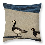 Two Barnacle Geese Throw Pillow