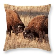 Two Bull Bison Facing Off In Yellowstone National Park Throw Pillow