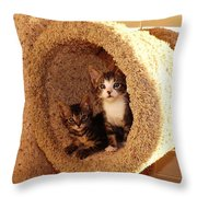 Two Cats In A Condo Throw Pillow