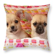 Two Chihuahuas Throw Pillow by Greg Cuddiford