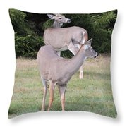 Two Does 1 Of 24 Throw Pillow