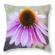 Two Echinacea Throw Pillow