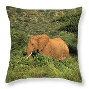 Two Elephants Walking Through The Grass Throw Pillow