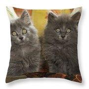 Two Fluffy Kittens Throw Pillow